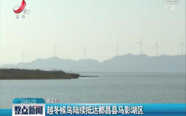 越冬候鸟陆续抵达都昌县马影湖区
