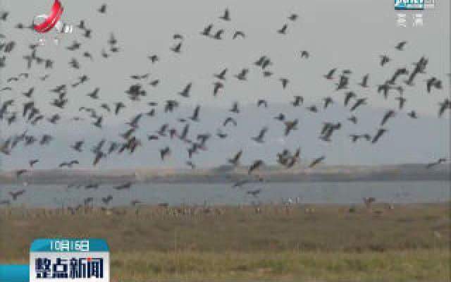 都昌:为越冬候鸟护航