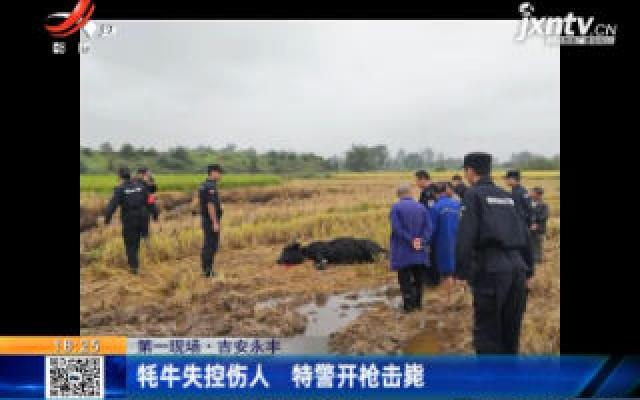 【第一现场】吉安永丰:耗牛失控伤人 特警开枪击毙
