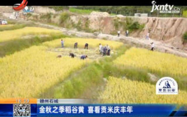 赣州石城:金秋之季稻谷黄 喜看贡米庆丰年