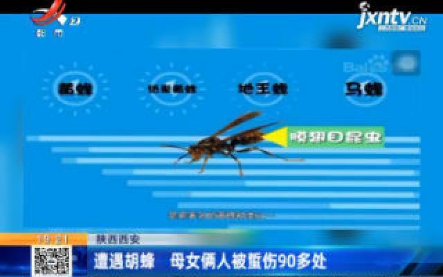 陕西西安:遭遇胡蜂 母女俩人被蜇伤90多处