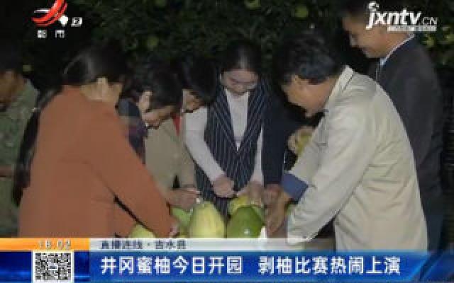 吉水县:井冈蜜柚10月20日开园 剥柚比赛热闹上演