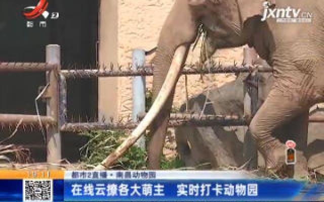 【都市2直播】南昌动物园:在线云撩各大萌主 实时打卡动物园