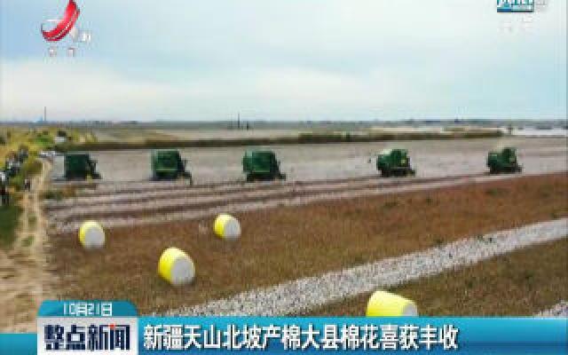 新疆天山北坡产棉大县棉花喜获丰收