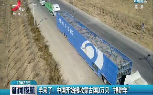 """羊来了!中国开始接收蒙古国3万只""""捐赠羊"""""""