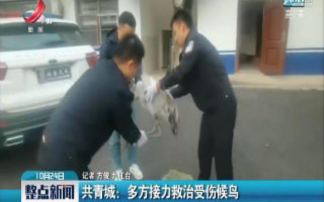 共青城:多方接力救治受伤候鸟