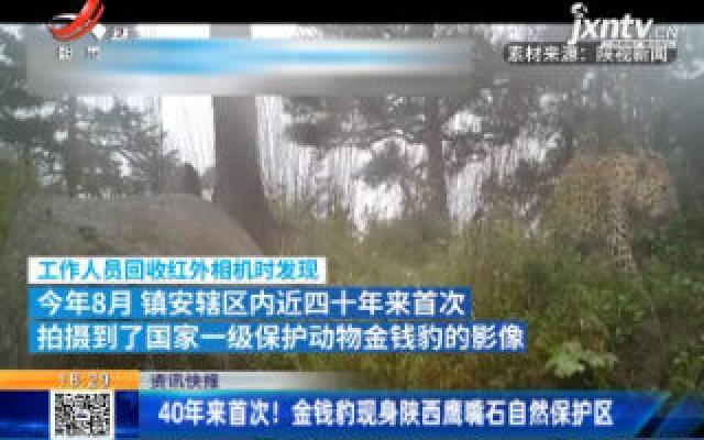 40年来首次!金钱豹现身陕西鹰嘴石自然保护区