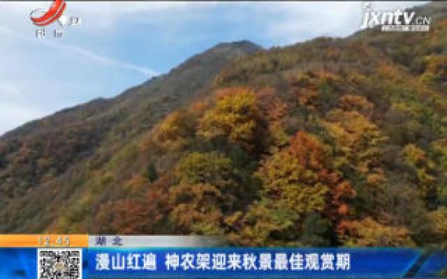 湖北:漫山红遍 神农架迎来秋景最佳观赏期