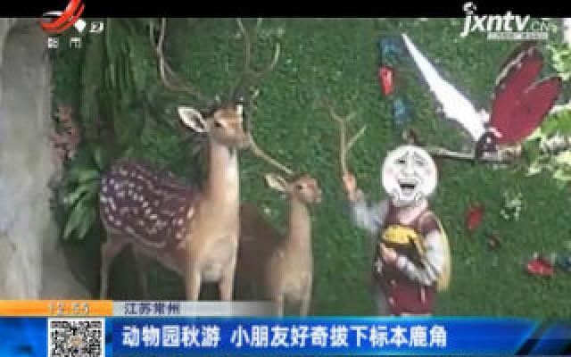 江苏常州:动物园秋游 小朋友好奇拔下标本鹿角