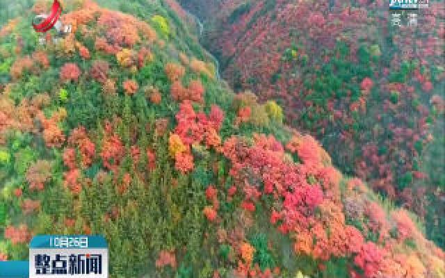 秋色染秦岭 红叶入画来
