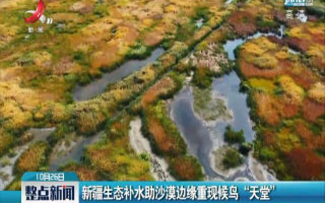"""新疆生态补水助沙漠边缘重现候鸟""""天堂"""""""