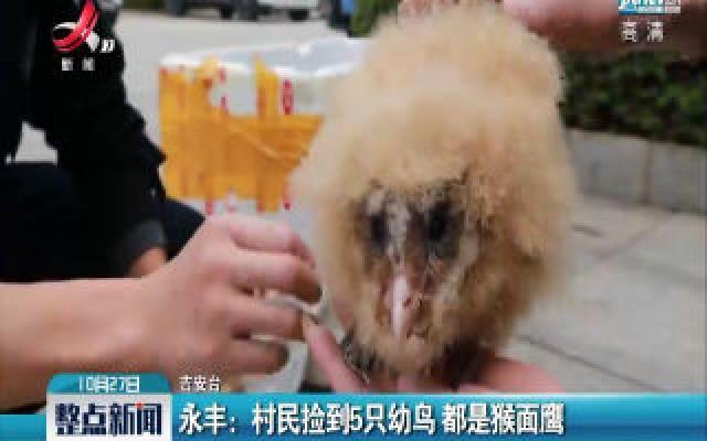 永丰:村民捡到5只幼鸟 都是猴面鹰