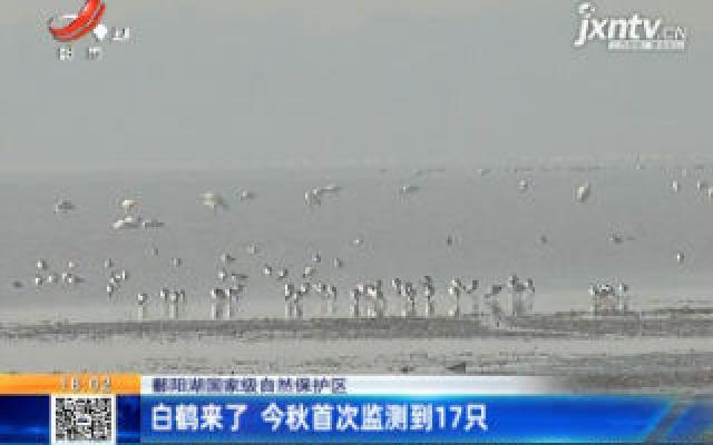 【鄱阳湖国家级自然保护区】白鹤来了 今秋首次监测到17只