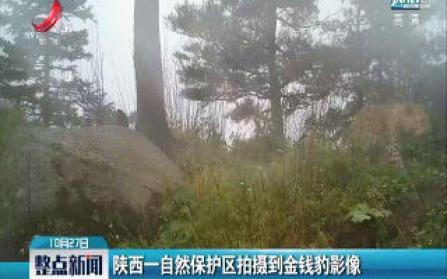 陕西一自然保护区拍摄到金钱豹影像