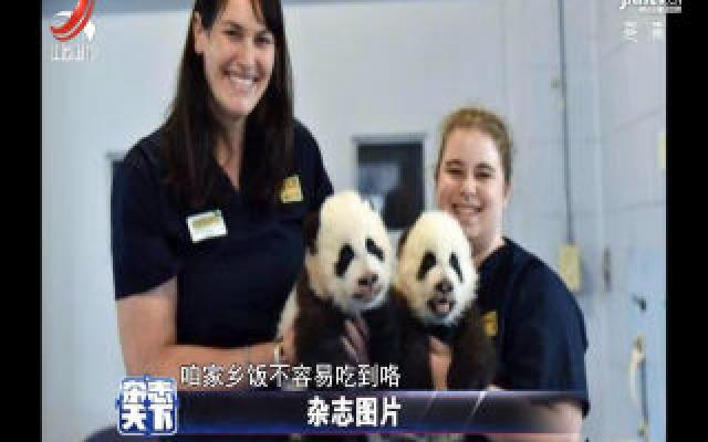 中国赠给国外熊猫 它们正在吃最后一顿家乡饭