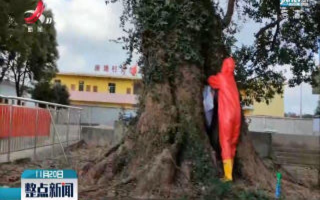 樟树:校园惊现马蜂窝 学生被蜇伤
