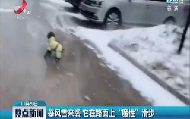 """哈尔滨:暴风雪来袭 它在路面上""""魔性""""滑步"""