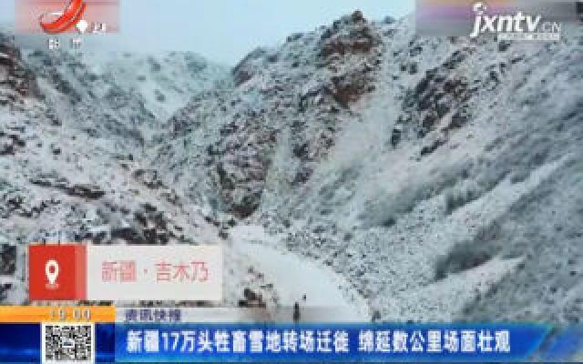 新疆17万头牲畜雪地转场迁徙 绵延数公里场面壮观
