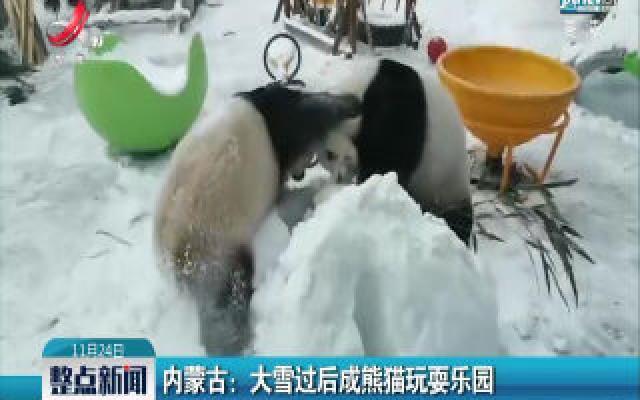 内蒙古:大雪过后成熊猫玩耍乐园