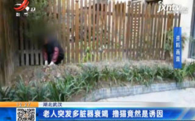 湖北武汉:老人突发多脏器衰竭 撸猫竟然是诱因