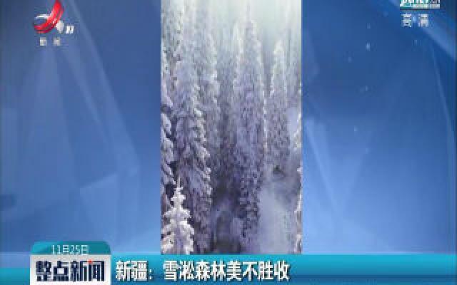 新疆:雪淞森林美不胜收