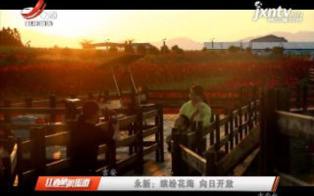 吉安永新:缤纷花海 向日开放