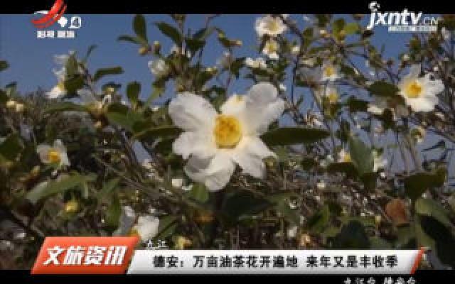 德安:万亩油茶花开遍地 来年又是丰收季