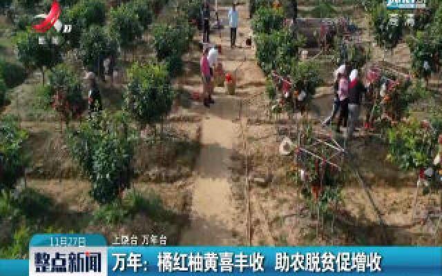 万年:橘红柚黄喜丰收  助农脱贫促增收