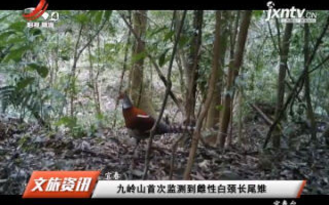 宜春:九岭山首次监测到雌性白颈长尾雉