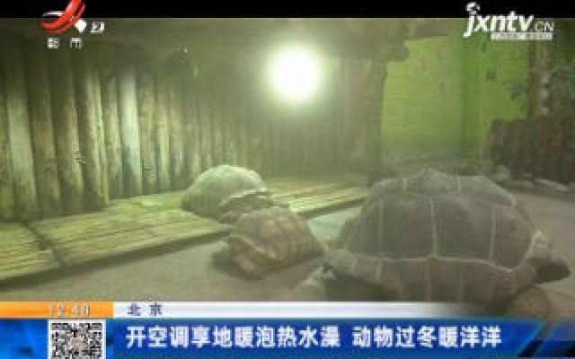 北京:开空调享地暖泡热水澡 动物过冬暖洋洋