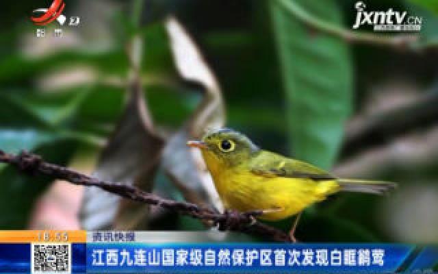 江西九连山国家级自然保护区首次发现白眶鹟莺