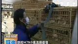 【聚焦】专家:春节期间H7N9疫情不会暴发
