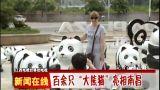 """新闻在线【百余只""""大熊猫""""亮相南昌】"""